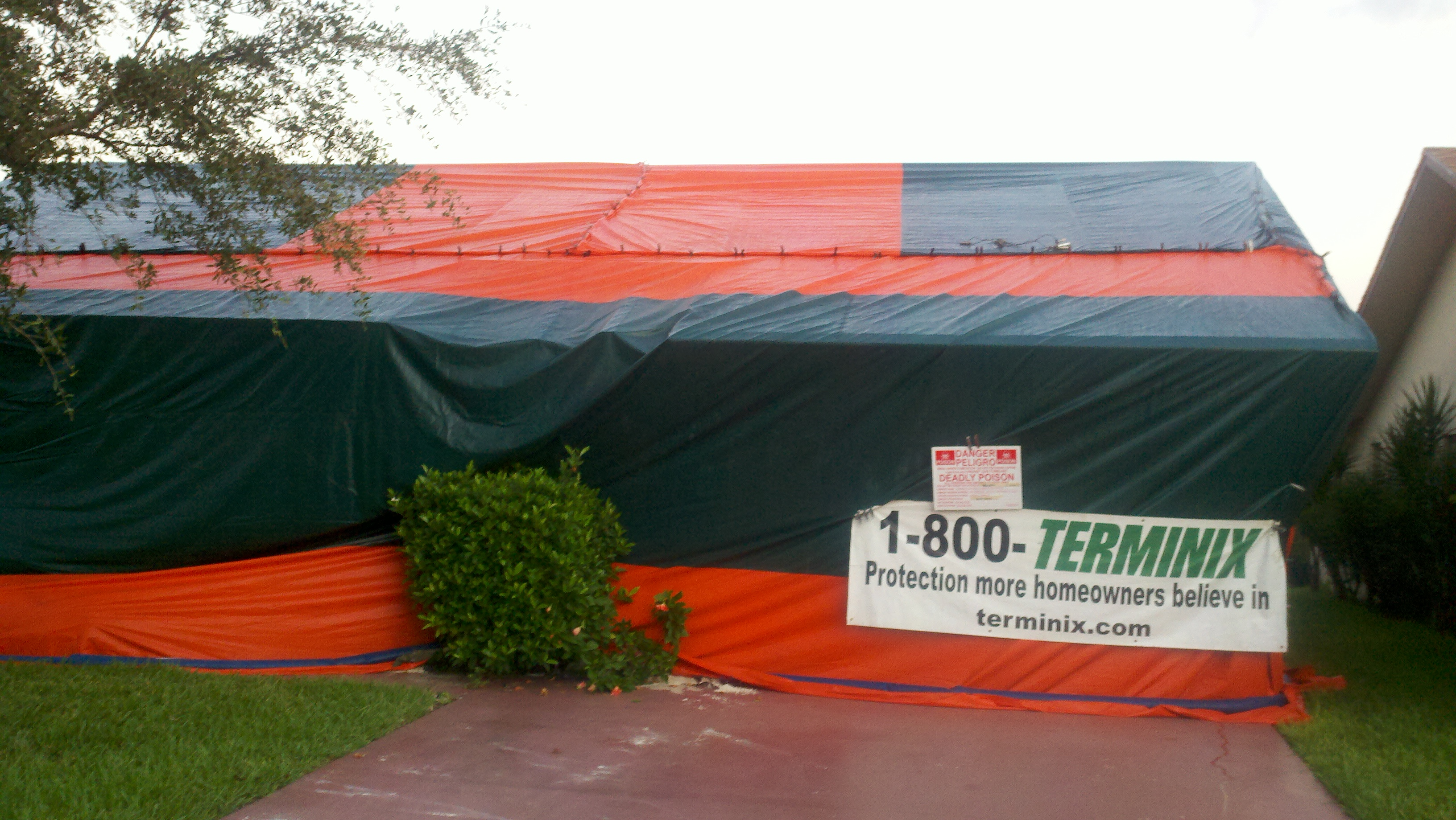 Vikane & Allergy u2013 Is Vikane Termite Fumigation For You? | Mold Inspections